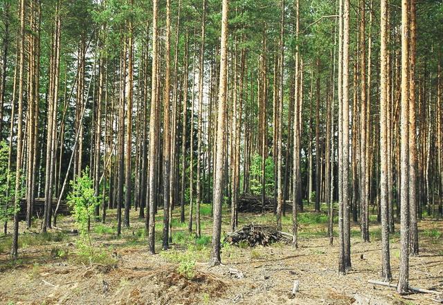 ООО КМДК «СОЮЗ-Центр» произведет уход за лесными культурами на площади 3400 га