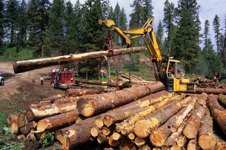 Правила заготовки древесины