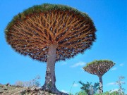 Какие бывают деревья?