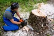 Как выкорчевать дерево