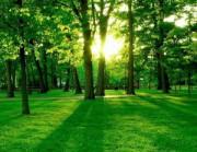 ООО КМДК «СОЮЗ-Центр» отмечает международный День леса