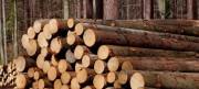 В навигацию - 2017 Архангельский ЦБК увеличит поставки лесосырья водным путем до 587 тыс. м³