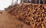 За 10 мес. 2016 г. заготовка древесины леспромхозами ГК «Титан» составила 1 731,2 тыс. м³