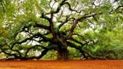 Интересные факты о деревьях
