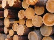 Масса плотного 1м3 древесины, кг