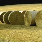 Биомасса как источник возобновляемой энергии