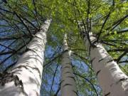 Что такое дерево