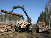 ГОСТ на лесоводство и производство лесопильное