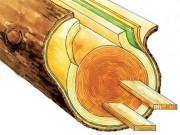Книги по характеристикам дерева