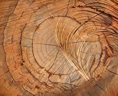 Полезные свойства можжевеловой древесины