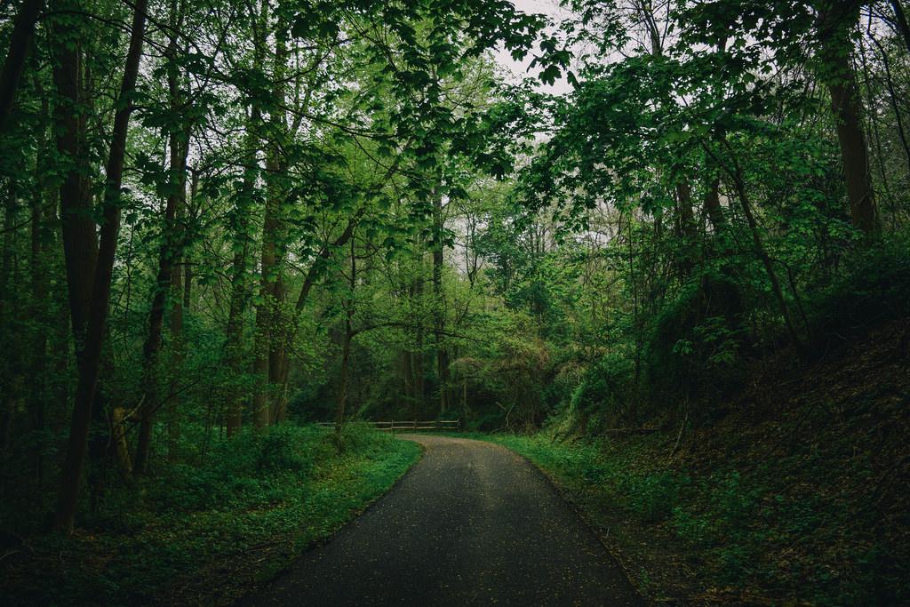 Леса и глобальное потепление