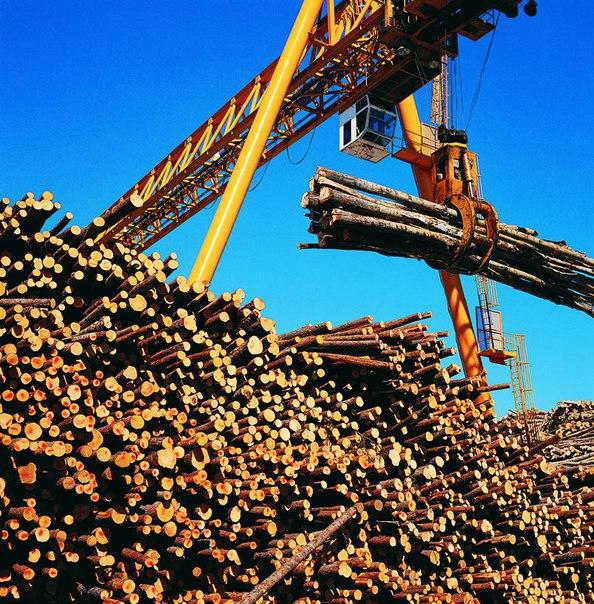 Россия – мировой экспортёр лесных ресурсов!
