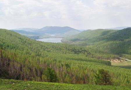 Растительный мир Ильменского заповедника