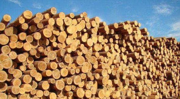 Целесообразное использование отходов древесины