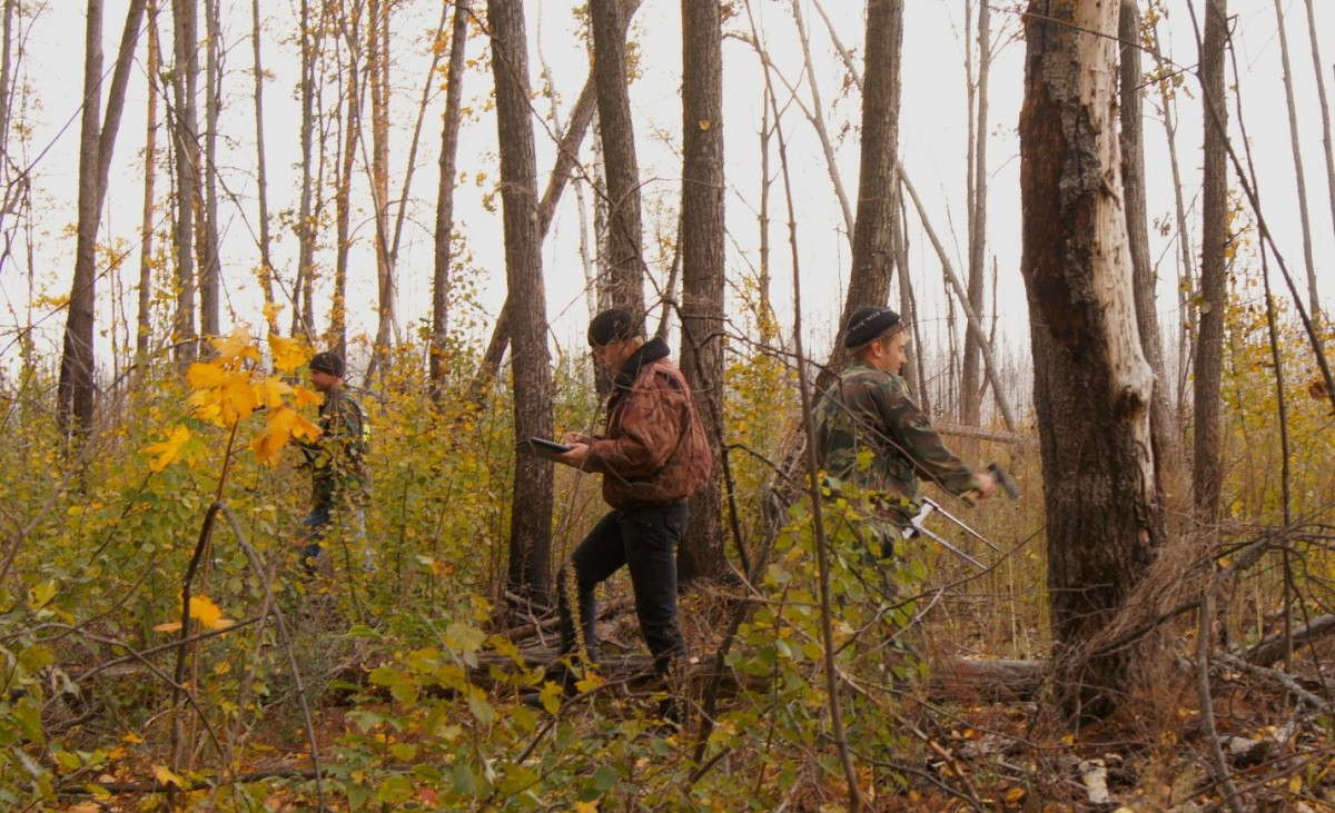 Проблемы лесного комплекса