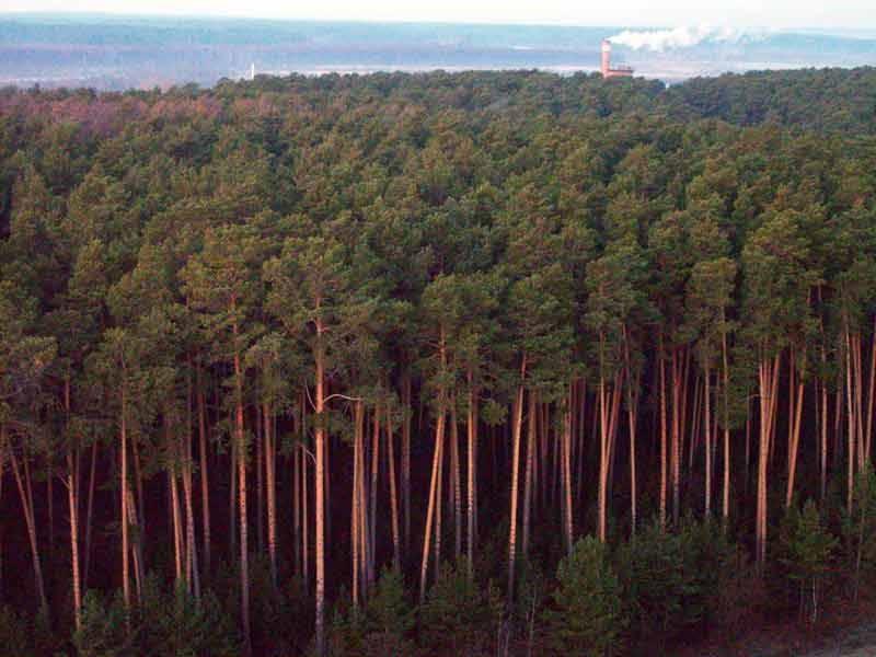 Оценка состояния зеленых насаждений России