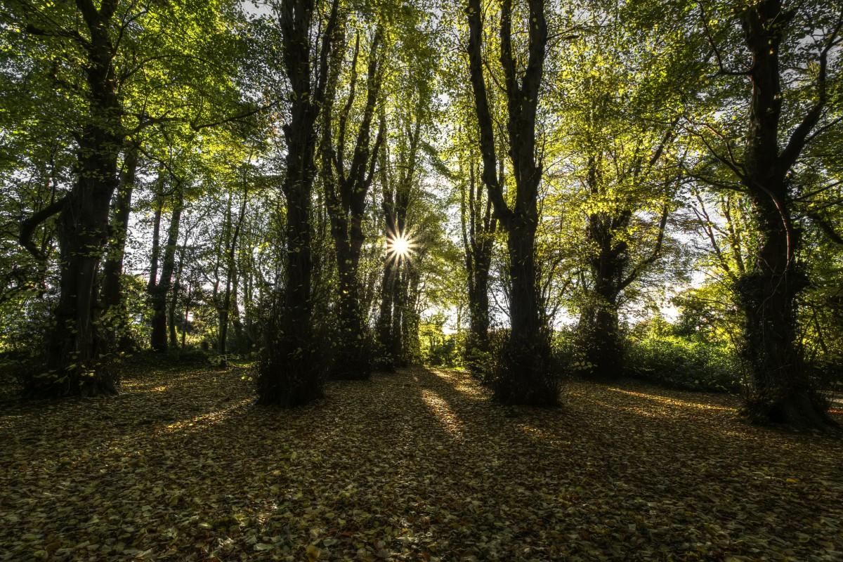 Особенность буковых лесов Кавказа