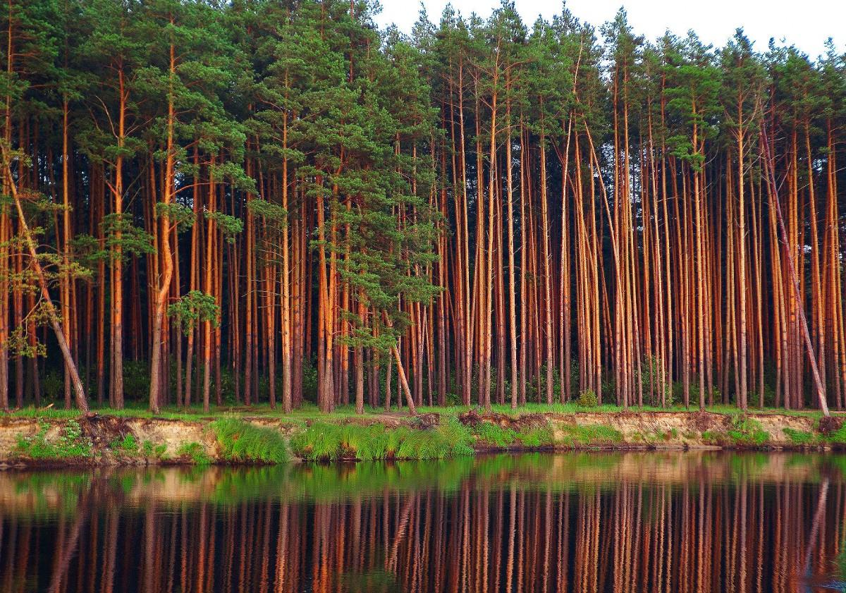 Экономическая оценка лесных ресурсов России