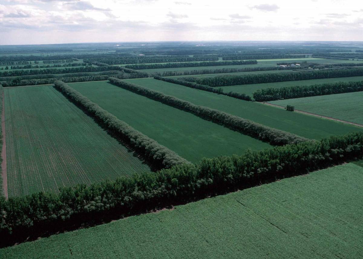 Полезащитные лесные насаждения - виды и назначение