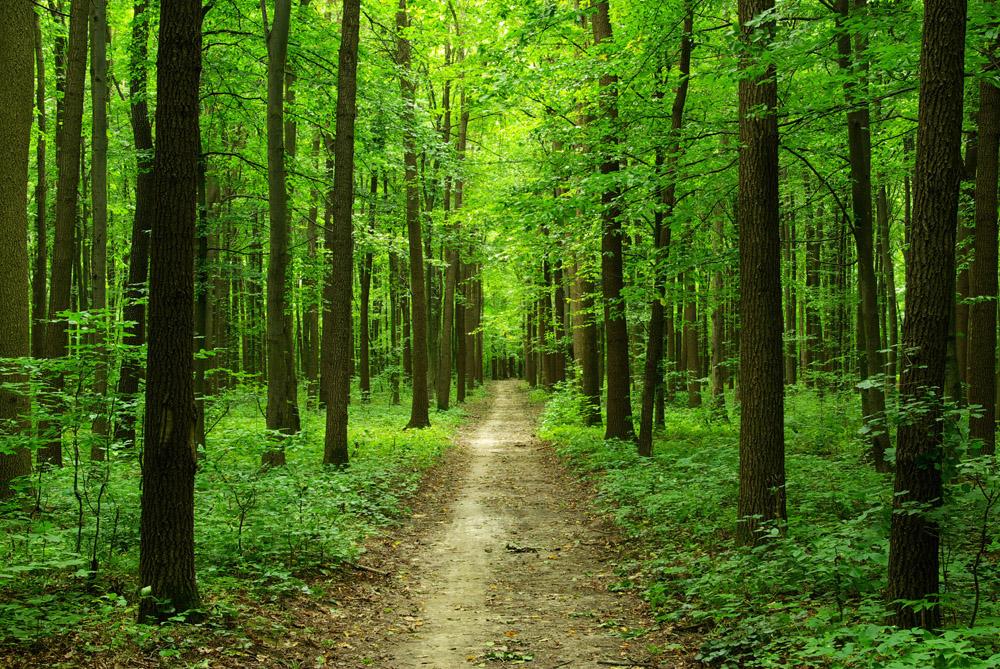 Древесно-кустарниковые породы - использование и назначение