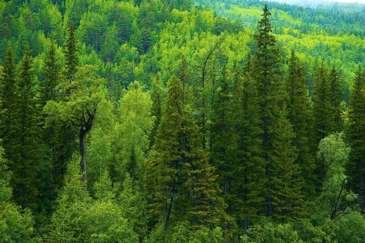 Особенности лесоводственного ухода
