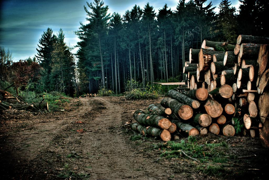 Уход за лесом вырубкой
