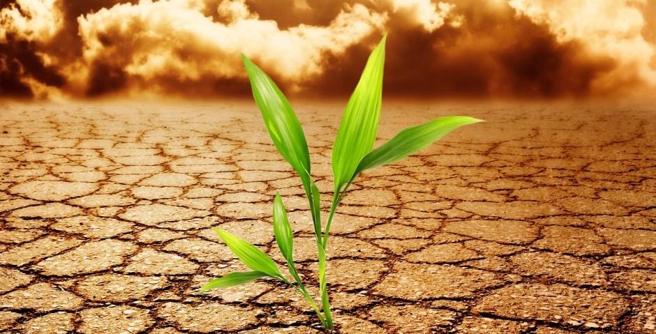 Характеристика почвенно-климатических условий