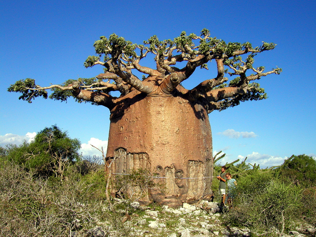 Фантастика в мире деревьев