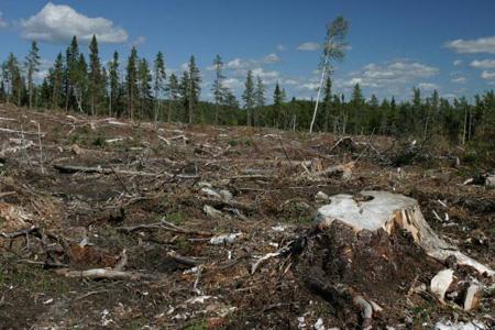 Экологические проблемы лесостепи и степи