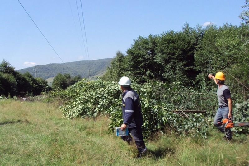 Расчистка древесно-кустарниковой растительности