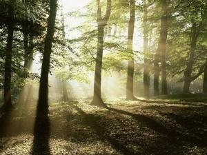 Типы лесорастительных условий