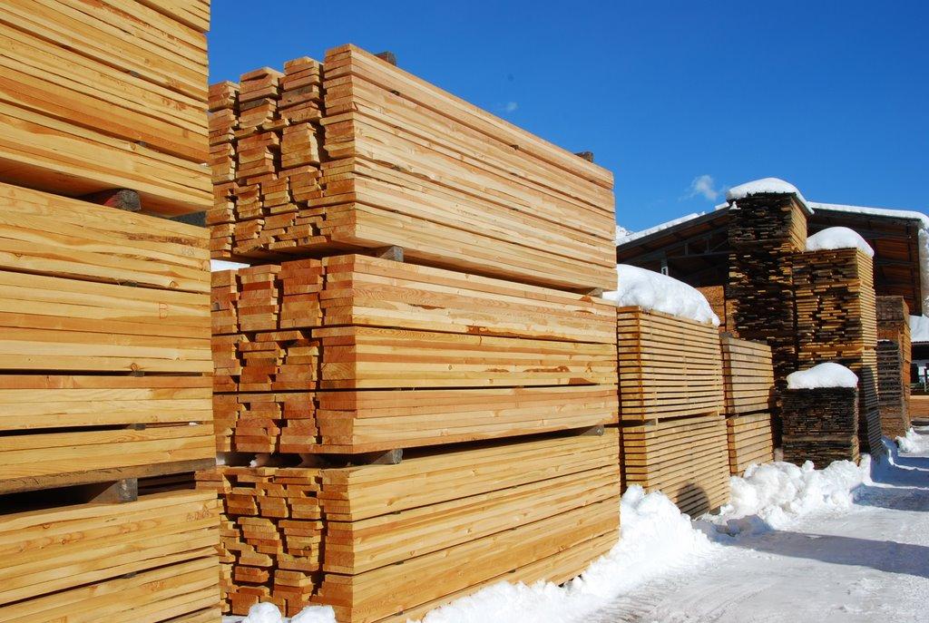 Перспективы будущего лесной промышленности