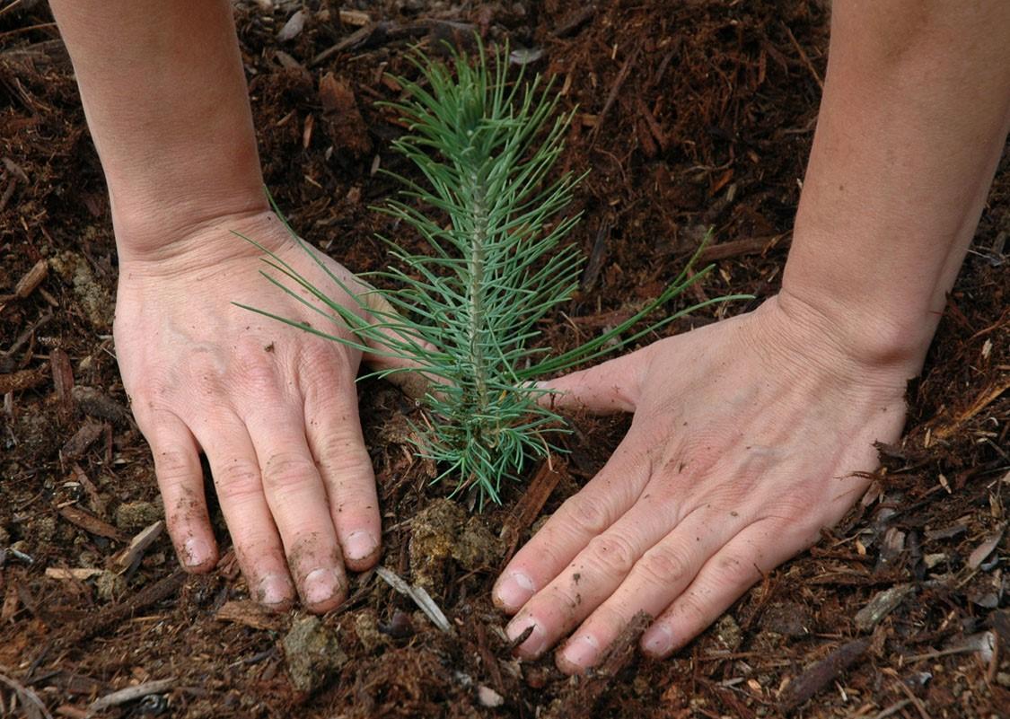 Использование охраны защиты воспроизводства лесов