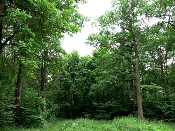 Важность лесных рекреационных ресурсов