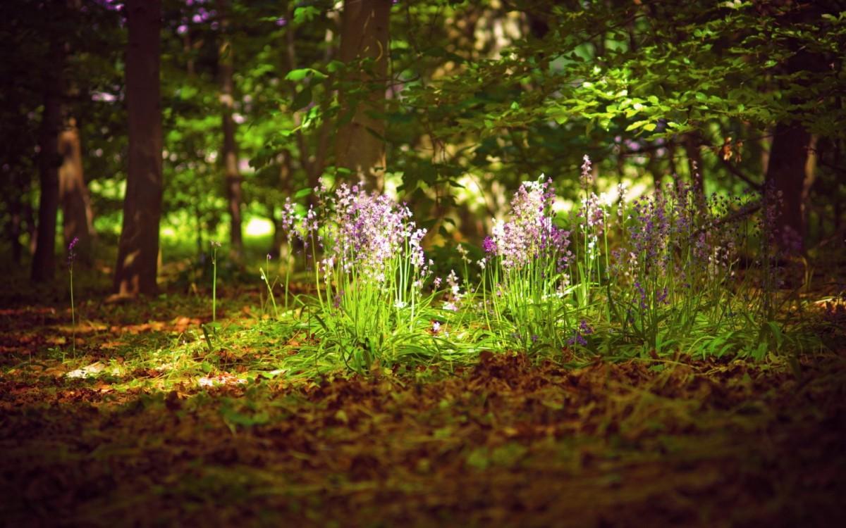 Лесной ценоз - определение и назначение