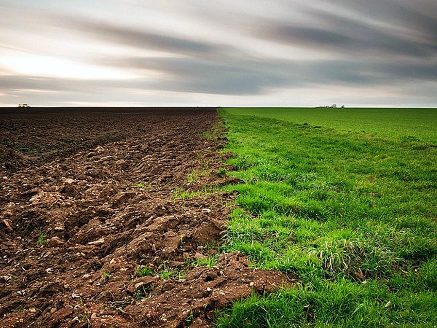 Показатели биологической активности почвы