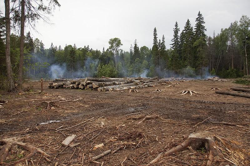 Важность очистки лесосек от порубочных остатков
