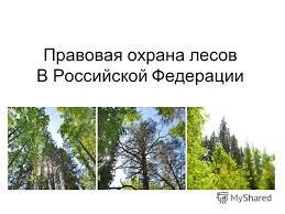 Руководитель Минприроды России возглавил в Иркутске заседание по проблемам охраны и защиты лесов