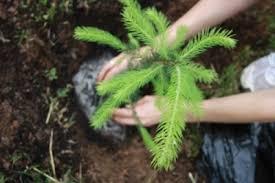 Всероссийский день посадки леса состоялся в Тверском