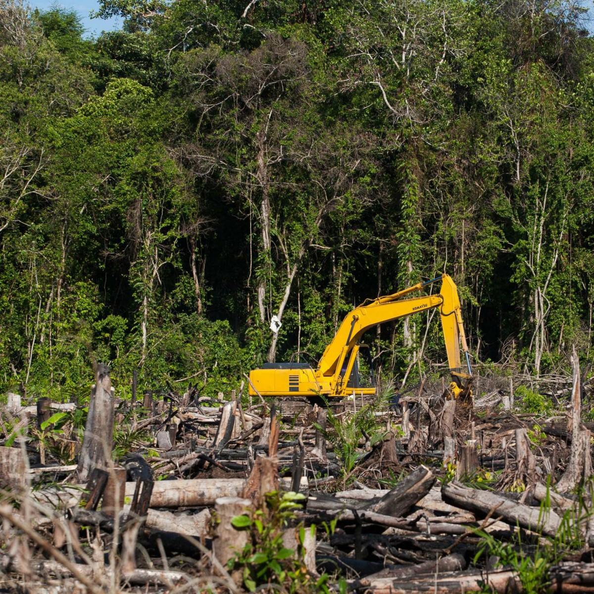 Дроны посадят свыше 15 миллиардов деревьев