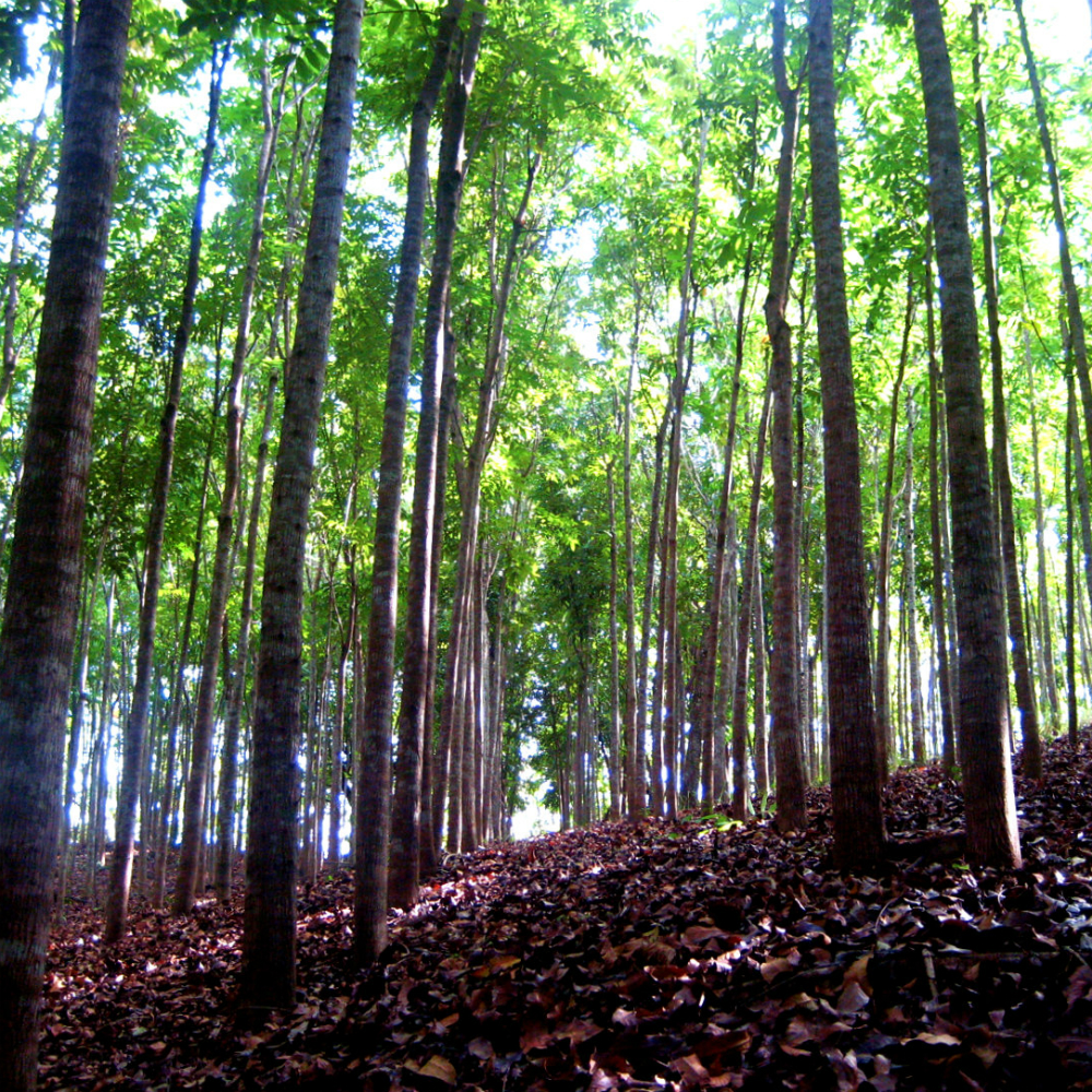 Лесодобывающая компания Kangaroo Island Plantations открывает офис в Кингскоуте