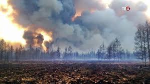 Межрегиональная авиалесохрана занимается тушением лесных пожаров в Ямало-Ненецком автономном округе