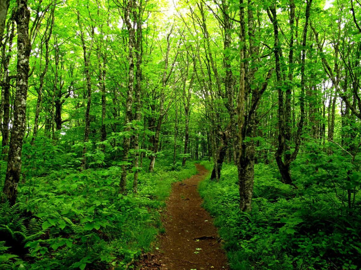 Вырубка лесных массивов в Канаде приовдит к миллионам тонн ранее неучтённых углеродных выбросов