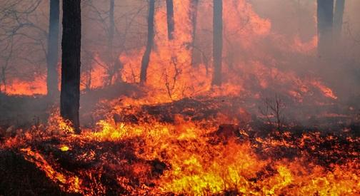 В Забайкалье и на юге Дальнего Востока осложняется положение с лесными пожарами