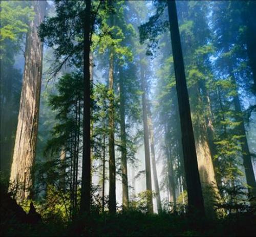 В Томском регионе отчитались о росте эффективности системы охраны и восстановления лесов