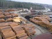 Производители США призвали ужесточить ограничения на экспорт пиломатериалов Канады