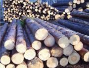 Древесина в быту и строительстве