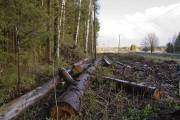 Сохранение биоразнообразия при лесосечных работах