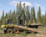 5 шагов к успешному бизнесу в сфере лесной промышленности