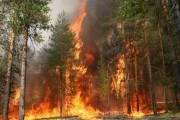 Проблематика борьбы с лесными пожарами в современной России